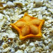 A starfish lying on shells in the Istanbul aquarium. - stock photo