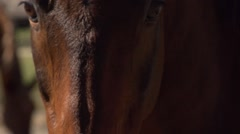 Horses face in close up Stock Footage