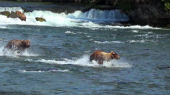 Larger Brown Bear Chases Smaller One Downstream Near Third Bear - Real Speed Stock Footage