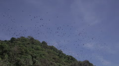 Flying foxes on sland of Boracay Stock Footage