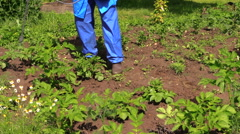 Man kill weed spraying pesticides in field potato Stock Footage