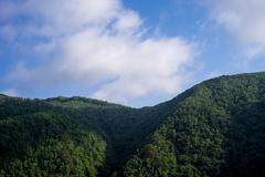 Mountain covered with trees in the morning, Fukushima Prefecture, Japan Kuvituskuvat
