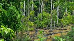Krabi, Wildlife Sanctuary, Sa Morakot, Thailand Stock Footage