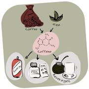 Colorful info-graphics: caffeine production and usage - stock illustration
