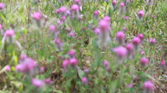 Flowers on The Emmaus Road (Traditional route of Jesus) Stock Footage