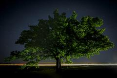 Oak tree with green leaves on a background of the night sky and the Milky Way - stock photo