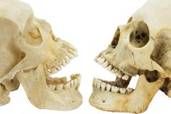 Two human skulls opposite of each other Stock Photos