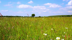 Summer meadow in Belgian countryside. Stock Footage