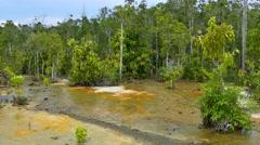 Krabi, Wildlife Sanctuary, Sa Morakot, Thailand - stock footage