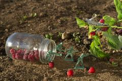 Protect the raspberry - stock photo