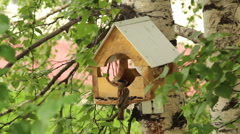 A wooden bird feeder. Sparrows in a manger peck sunflower seeds - stock footage