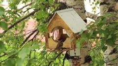 A wooden bird feeder. Sparrows in a manger peck sunflower seeds Stock Footage