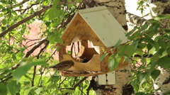 Sparrows in a manger peck sunflower seeds Stock Footage