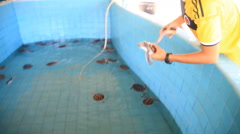 Baby sea turtle release into pool conservation Stock Footage