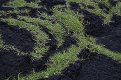 Grass on volcanic rock - stock photo