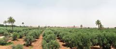 Marrakech panorama Stock Photos
