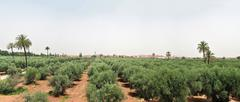 Marrakech panorama - stock photo