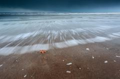 Sea star on North sea coast at storm Stock Photos