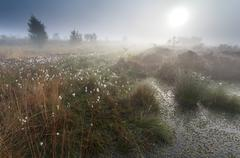 Misty summer sunrise on swamp Stock Photos