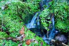 little mountain stream and greens - stock photo