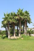 Gardens with palm tree near the beach Cyprus Stock Photos