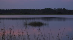 Florida swamp at sunset Stock Footage