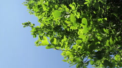 Dreamy Summer Leaves Stock Footage