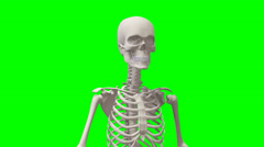 Animation of a human skeleton with green screen Stock Footage