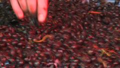 Grape in fermentation tank Stock Footage