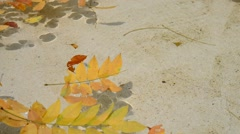 Yellow leaf in the water Stock Footage
