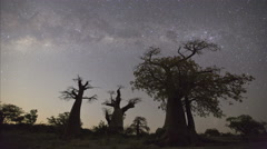 4K Star time-lapse, milky way galaxy and Baobab trees, Botswana Stock Footage