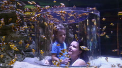 Mother and child inside clown fish tank, Two Oceans Aquarium, Cape Town Stock Footage