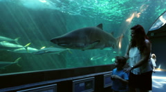 Mother and child looking at sharks , Two Oceans Aquarium, Cape Town Stock Footage