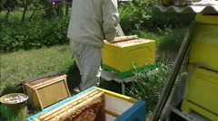 Stock Video Footage of beekeeping in the russian province