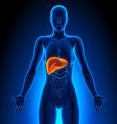 Liver - Female Organs - Human Anatomy - stock illustration