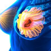 Breast Cancer - Female Anatomy - isolated on white Stock Illustration