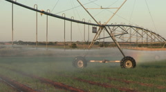 Centre pivot irrigation system moving slowly across vegetable fields,South Stock Footage