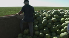 Migrant workers stack watermellons Stock Footage