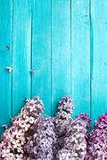 Lilac Flowers Bouquet on Wooden Plank Background - stock photo