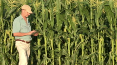 Farmer checking progress of corn fields with digital tablet,South Africa Stock Footage