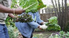 Senior black couple gardening together - stock footage