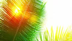 Golden Sun Shining through a Palm Leaf Stock Footage