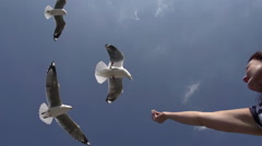Woman feeding seagulls.Hartlaub's gull, Cape Town, South Africa Stock Footage