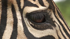 Close-up of zebra's eye, South Africa Stock Footage