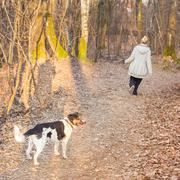 Woman walking her mixed bred dog. - stock photo