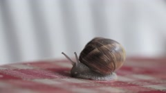 Cute Garden Snail Crawling over Checkered Table 1 Stock Footage