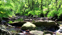 Small forest river. Stock Footage