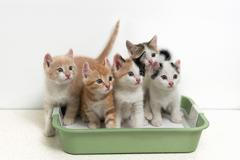 Kittens sitting in cat toilet Kuvituskuvat