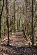Pathway in a forest Stock Photos