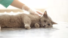 Cat on the examination at the veterinary clinic Stock Footage